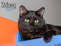 Hi, Im Sidney! I recently came here to Foothills Animal