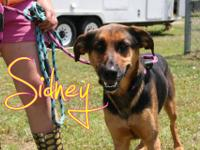 Sidney is a beautiful shepherd/hound mix girl rescued