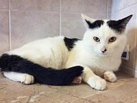 Sidney the Super-Friendly Cow Cat!'s story Meet Sidney-