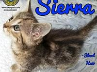Sierra's story You can fill out an adoption application