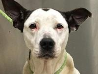 SIERRA-URGENT's story We do not euthanize any dogs,