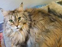 Sierra(bonded with Sadie)'s story Big, Gorgeous, Fluffy