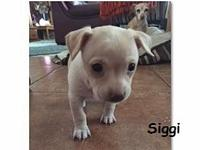 Siggi's story ~~This is Siggi. She and her sister