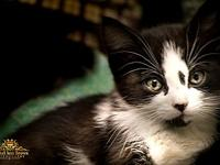 Signy's story Hi, I'm Signy. I'm about 9 weeks old. My