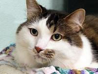 Silas's story Silas is a very shy boy looking for a new