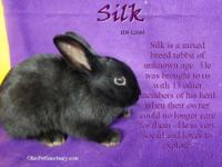 Silk arrived with a large number of housemates from an