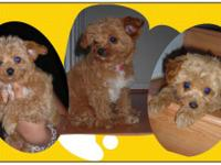 Description PUPPIES for sale  Friendly and spirited