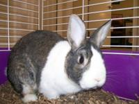 I have a breeding pair of silver marten rabbits the
