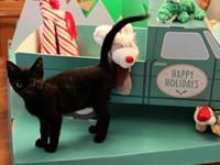 Silverado Truck's story This all-black kitten is very