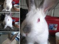 Sterling is a beautiful special needs bun who has front