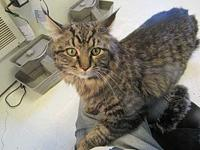 Simba's story TAILS adoption fees cover spay/neuter,