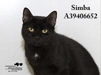 Simba's story All cats in the adoption program are