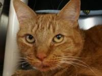 Simba's story My name is Simba and I'm available for