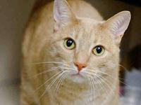 SIMBA's story COME AND GET ME! Favorite Things: Likes