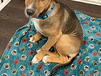 Simon's story Simon was rescued from the streets of
