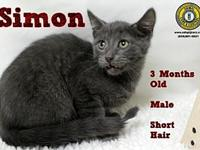 Simon's story You can fill out an adoption application