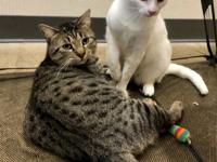 Simon & Wilson are a bonded pair and are approximately