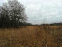 (Under Contract- Will Take Back-Ups)11.17 Acre farm