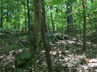 29 Wooded acres with Gilder Creek Frontage. Large