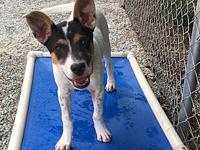 Siobhan's story Siobhan is a female jack Russell hound