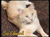 Sir Edward - Foster / 2018's story Sir Edward