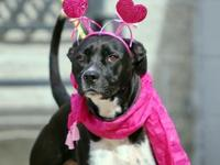 My story I am a sweet boy who deserves a loving home! I
