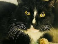 Sir Tux is a five year old male cat who was picked up