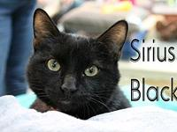 Sirius Black's story The adoption fee is $85.00 with an