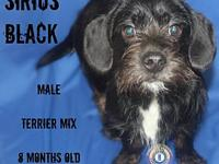 Sirius Black's story You can fill out an adoption