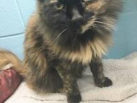 This sweet senior is Sissie, she is a 13yr. old, spayed