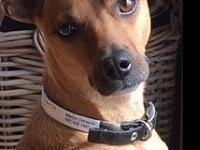 Sissy is a two-year old, 18 pound mixed breed from