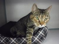 Sissy is a 3 year old spayed female.  She was