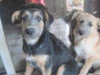 THESE GIRLS   ARE SISTERS. 4 MONTHS OLD, SPAYED AND