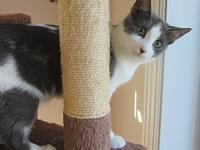 My story Skidder is a very sweet 3-4 months old kitten.