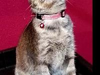 My story NAME: Skiie - femaleBREED: Domestic Short Hair