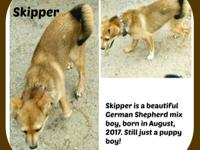 SKIPPER Skipper is a German Shepherd mix who has