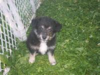 I have 6 puppies available, both males and females.