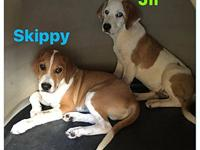 Skippy's story Skippy (shown with his brother Jif) were