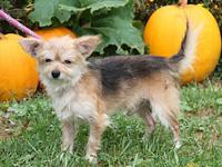 Skippy's story Skippy is a handsome adult male Terrier