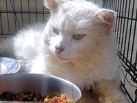 Skips's story Skips is a male long-haired white cat,