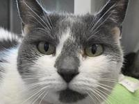 Skittles's story My name is Skittles. I am the lady in