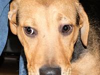 Skittles's story Skittles is one of our sweet Hound mix