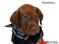Skittles's story Meet Londons seven puppies AJ, Ares,