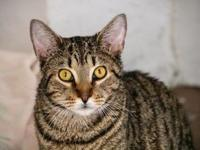 Sky's story Meet Sky, an interesting and likeable tabby