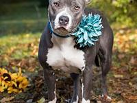 SKY's story SKY (#14841) - Sky (female) is 2 yrs old,