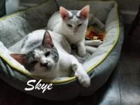 Skye was found as a stray and has decided that having a