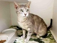 SKYE's story Sweet girl with a pastel Classic tabby