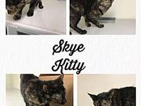 Skye Kitty's story Skye Kitty is about a year old,