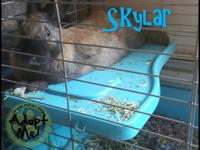 SKYLAR  This little guy was just surrendered yesterday