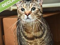 My story Skylar is a very sweet cat who is looking for